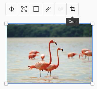 """Screenshot von Flamingo-Bild mit Hinweis auf Funktion """"Crop"""""""