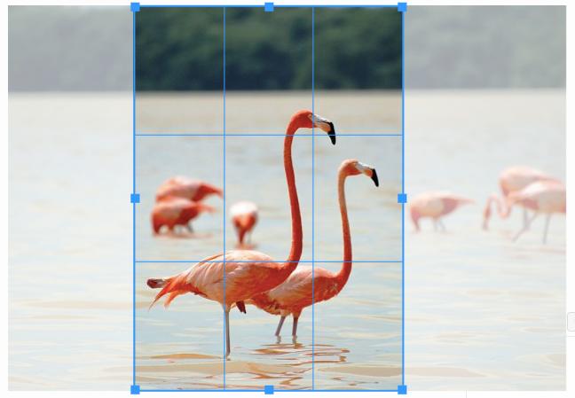 Screenshot von Flamingo-Bild mit Linien zum zuschneiden