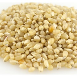 Baby White popcorn.jpg