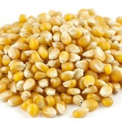 Mushroom Caramel Popcorn.jpg