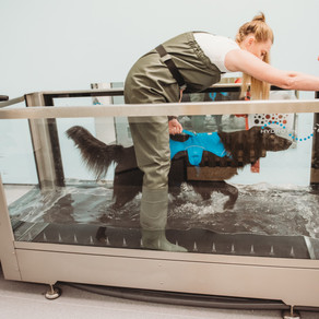 The Benefits of Hydrotherapy for dogs.