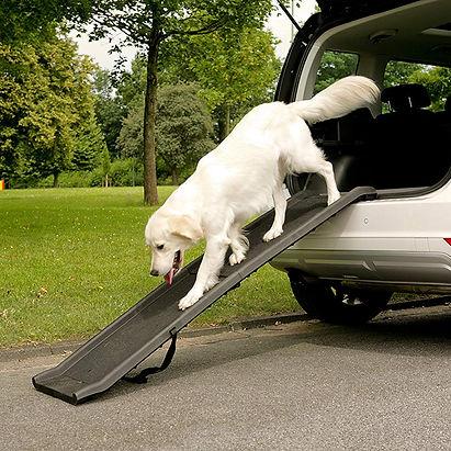 Dog on car ramp.jpg