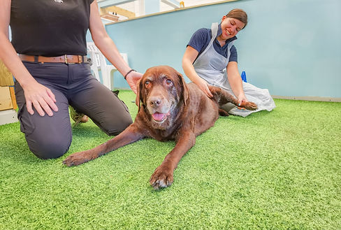 Veterinary physiotherapist carrying out canine physio treatment on Kia the dog