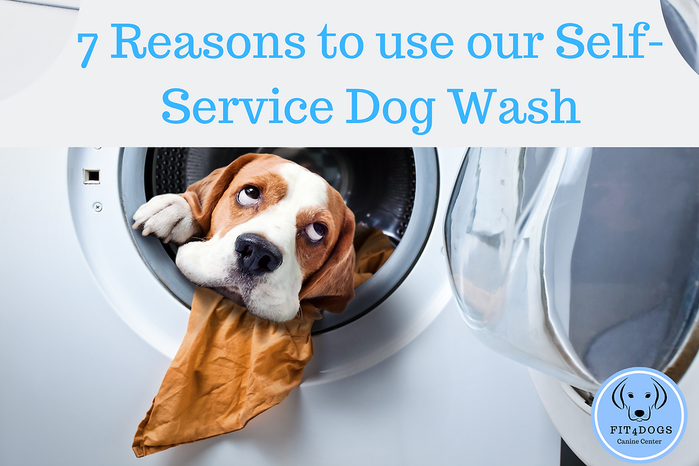 7 reasons to use our self service dog wash