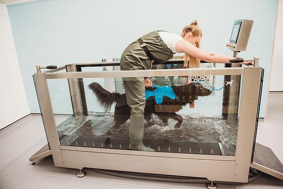 Fit4dogsuk hydrotherapist Kirsty in the Aquatic treadmill