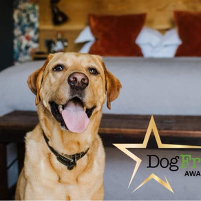Award Winning Canine Hydrotherapy Center in the top 3 at the Dog friendly awards.