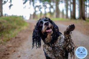 dirty dog dog wash Beverley