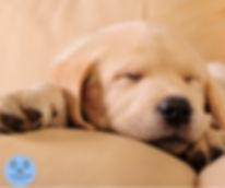 Puppy photo.jpg