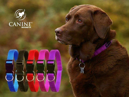 Magnetic Collars and how they can benefit your dog.