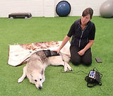 Fit4dogsuk dog physiotherapy pg