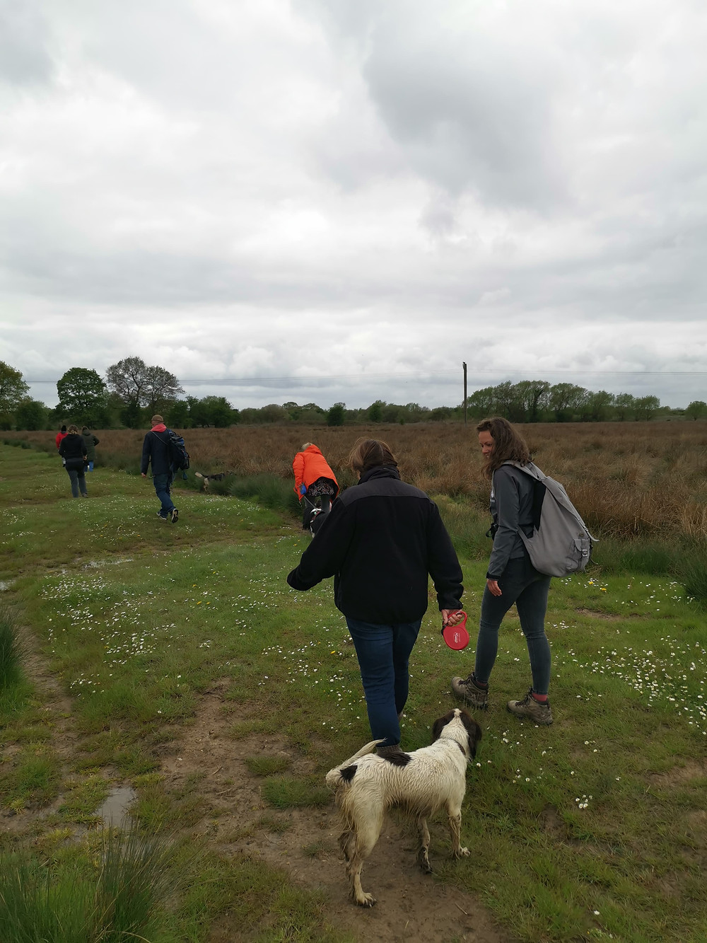 Dog walk from fit4dogsuk
