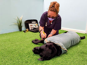 Vet nurse Kate carrying out dog cold laser therapy