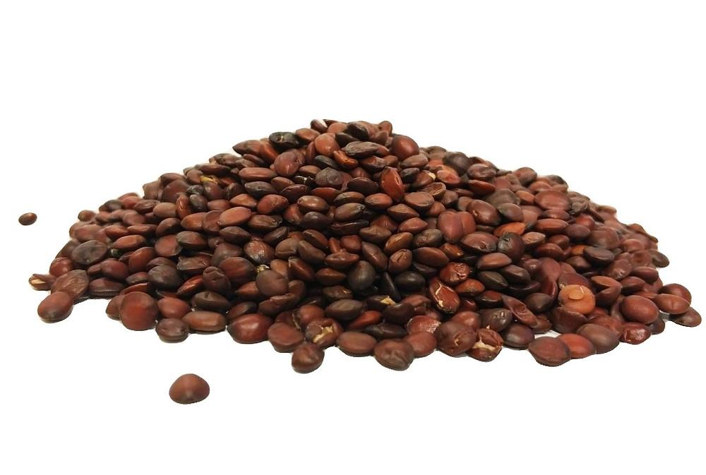 שיזף סיני, זרעי זיזיפוס, SUAN ZAO REN, ziziphus jujube