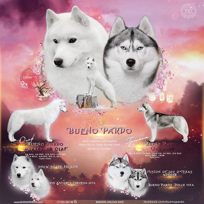 олаф и грильяж купить щенка сибирский хаски питомник россия воронеж