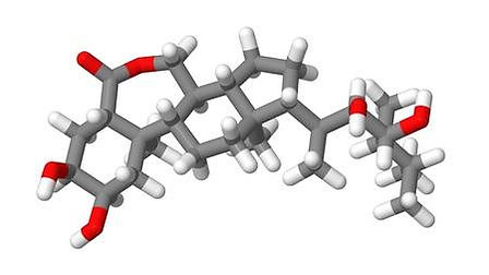 17613565-hormona-vegetal-brasinoesteroid