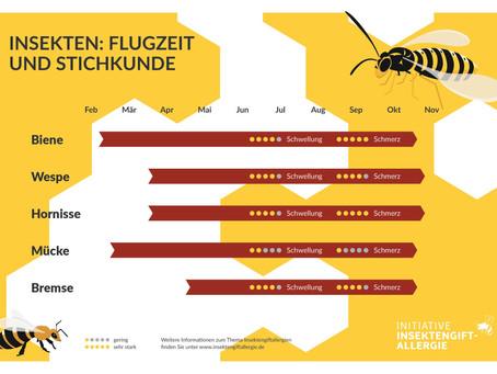 Gefahr nicht nur im Garten: Insektenstiche ernst nehmen