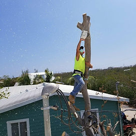 Jimmy C Details Tree Service Pressure Washing Window Washing