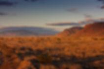 Sevilleta_grasslands_8730-.jpg
