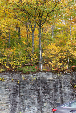 Fall Leaves, Rock Wall