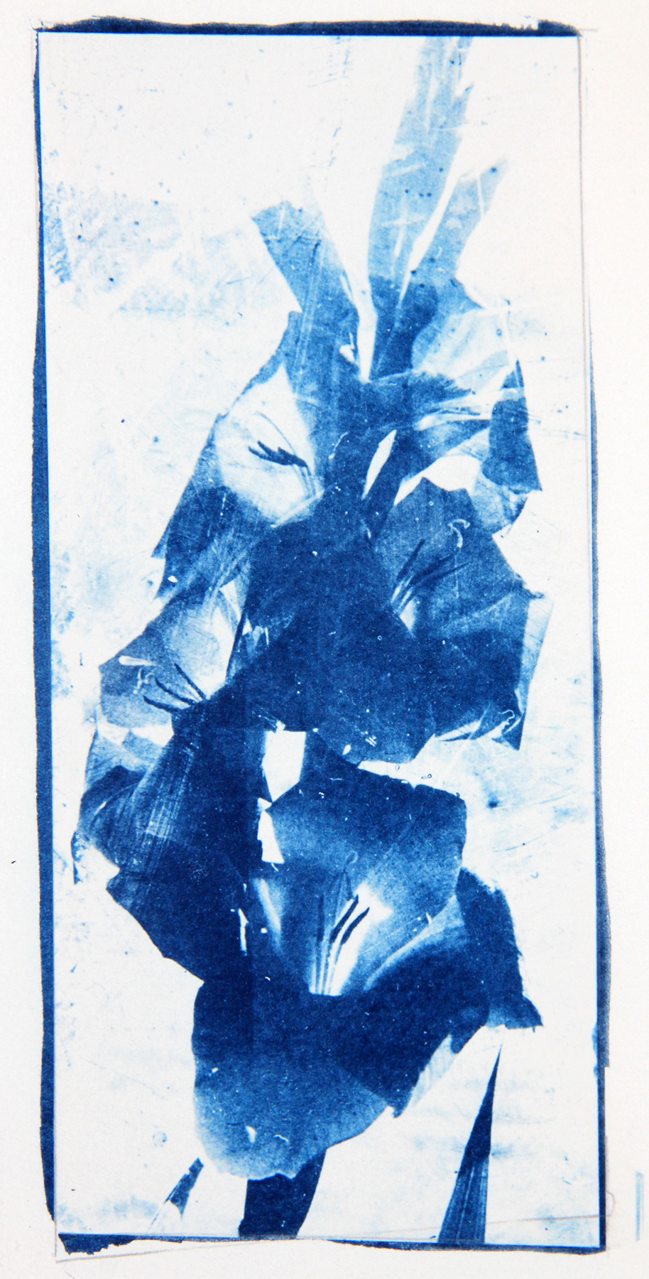 .cyanotype on paper
