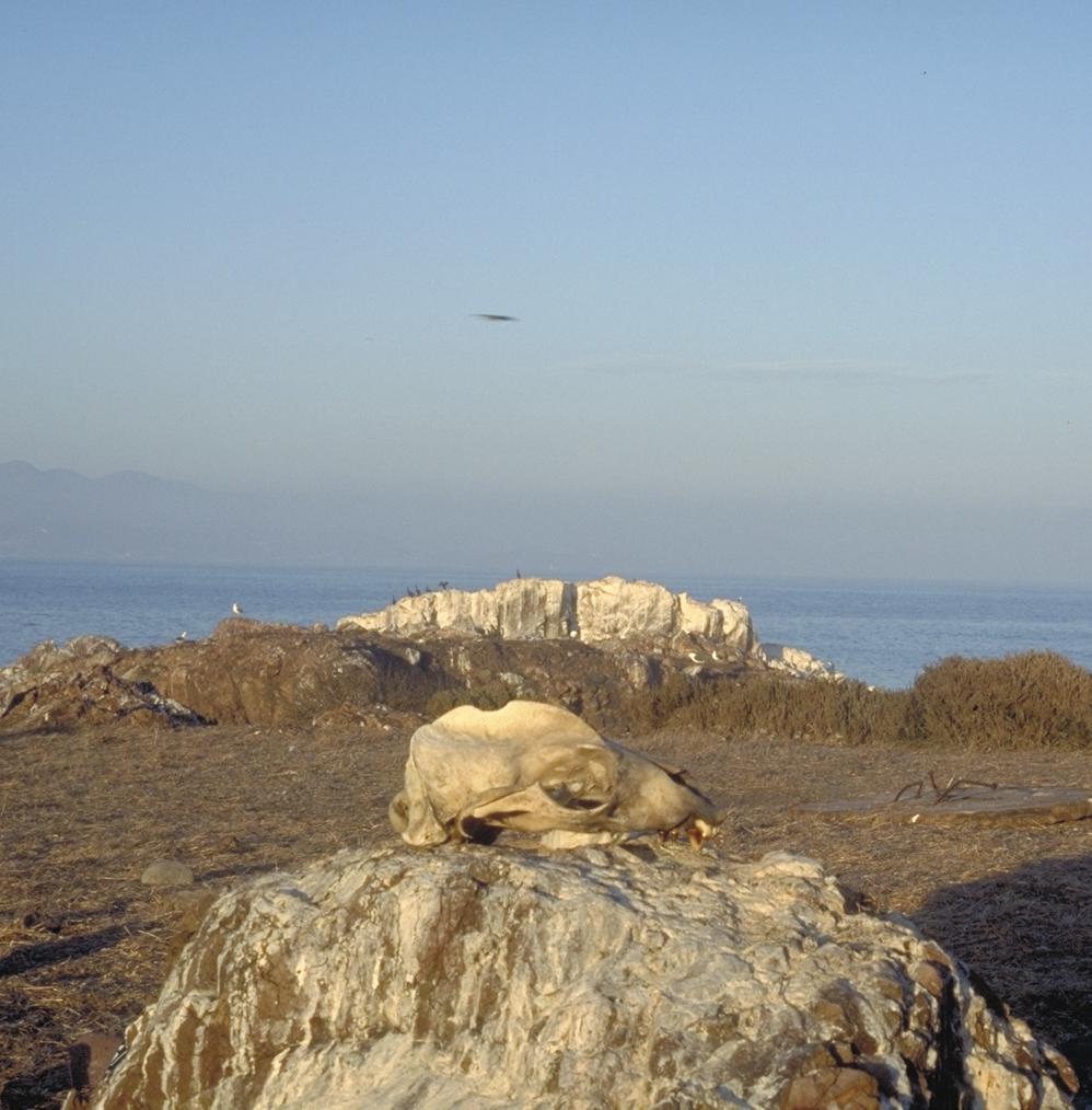 Sea Skull, Mexico