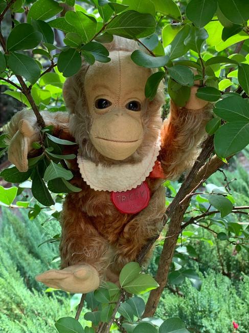 "Rare VINTAGE 9"" Schuco Mohair Tricky Yes / No Monkey w/Bib & Tag"