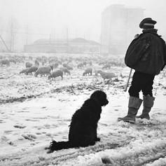 1964 Milano-Lorenteggio.jpg
