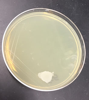 565 petri dish.jpg