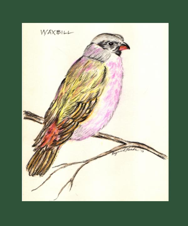 Wax Bill