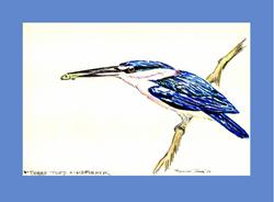 Three Toed Kingfisher