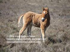 chincoteague-nature-encounters.jpg