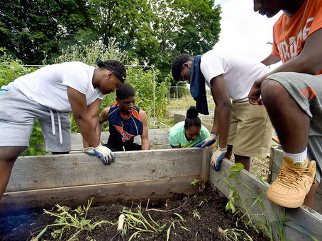 CNY Organizations Helping Inner-City Kids Learn More About Farming