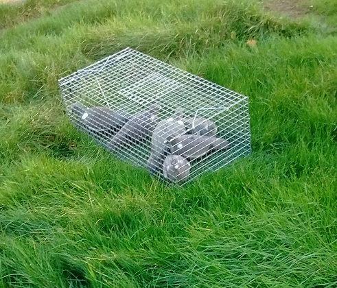 Pigeon Trap