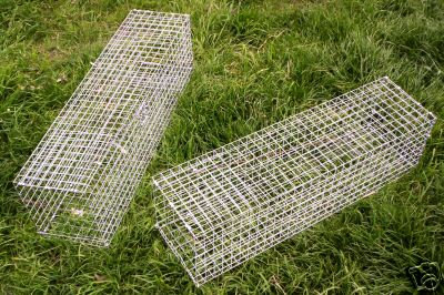 RABBIT TRAP CATCH-ALIVE SIMPLE, SAFE, EFFECTIVE