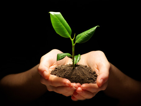 Understanding Growth: The 5 Phases to Business Success