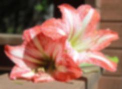 Flower-1.jpg