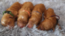 Pippi_Aug18_Newborn-1-1.jpg