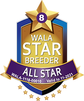 Coastal All Star Logo 2021.png