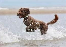 Dog Safety: Blue-Green Algae