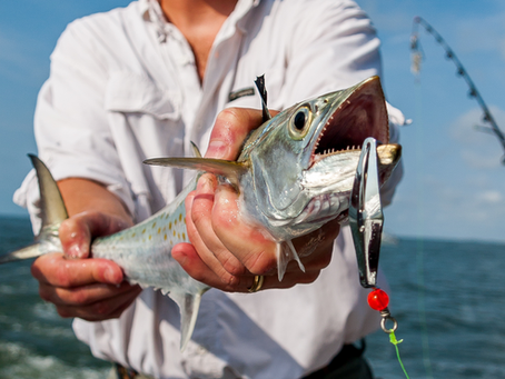 Spanish Mackerel Fishing Guide