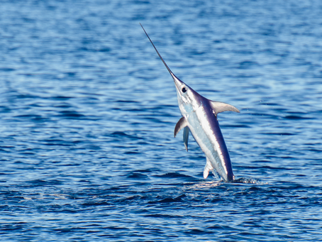 Swordfish Fishing Guide