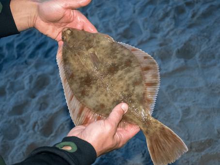 Flounder Fishing Guide