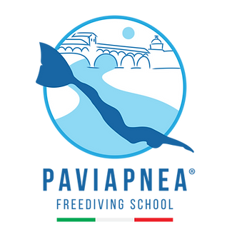 Pavia Logo - png.png