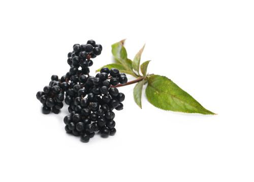 Hollunderbeere - Inhaltsstoff lipure Handcreme