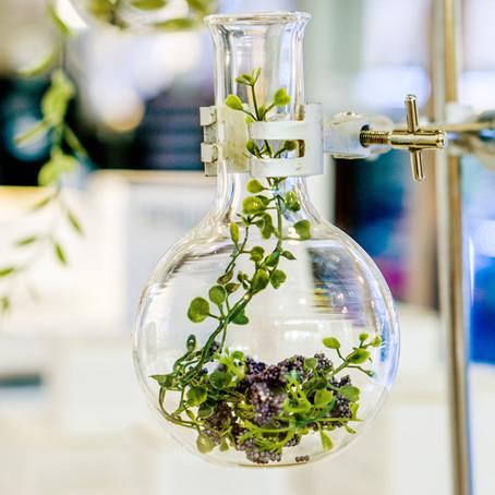 Pflanzenextrakte - Woher kommen sie?