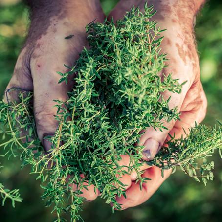 Nachhaltige Ernteprozesse