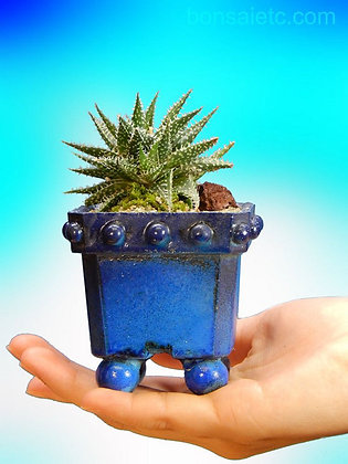 Miniature Baby Aloe Bonsai Flowering Gift in Handmade Bonsai Bowl (with Recycled