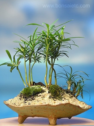 Handcrafted 'Tropical Island' Bonsai Tree