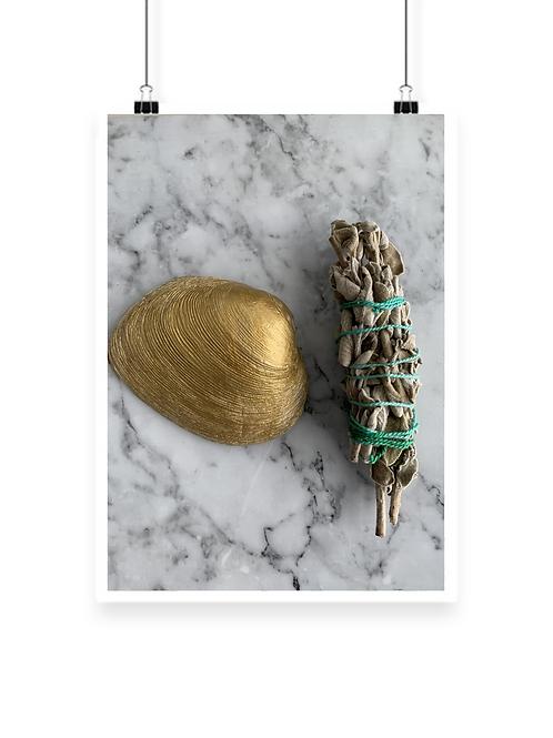 Gold Sage Shell
