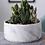 Thumbnail: Graphic Marble Ceramic Planter Pot for Succulents Office Desk
